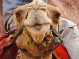 15-13 Petra scenes