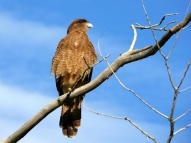 05 wilderness20 hawk