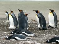 06 Falklands10