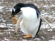 06 Falklands11