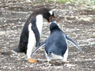 06 Falklands12