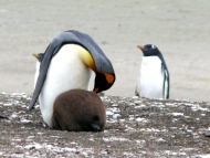 06 Falklands13