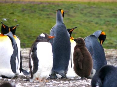 06 Falklands14