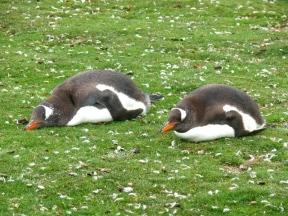06 Falklands15
