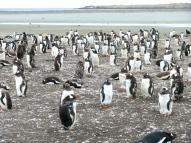 06 Falklands9