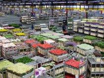 Aalsmere Flower Auction