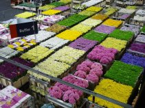 blog 03-Amsterdam06 Aalsmere Flower Auction
