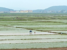 blog2 05 rice paddy fields