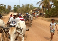 blog8 05 ox-cart fun