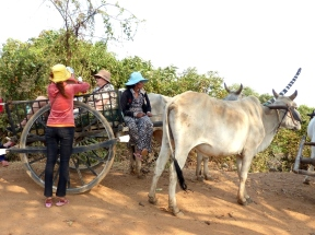 blog8 06 ox-cart fun