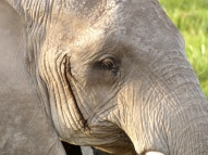 blog3-05 Amboseli