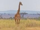 blog3-09 Amboseli-photo Gillian Burley