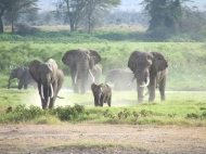 blog3-12 Amboseli