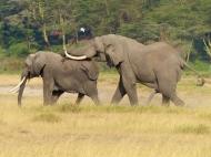 blog3-13 Amboseli
