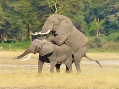 blog3-14 Amboseli