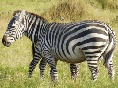 blog3-18 Amboseli