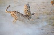 blog3-21 Amboseli-photo John Lawson