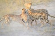 blog3-22 Amboseli-photo John Lawson