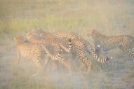 blog3-23 Amboseli-photo John Lawson