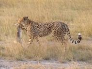 blog3-24 Amboseli