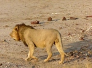 blog4-04 lion at last