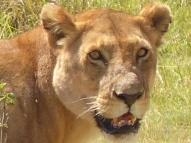 blog6-01 Serengeti