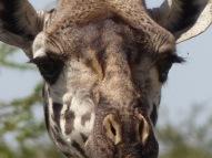blog6-02 Serengeti