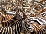blog6-03 Serengeti