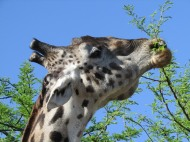 blog6-06 Serengeti