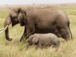 blog6-12 Serengeti