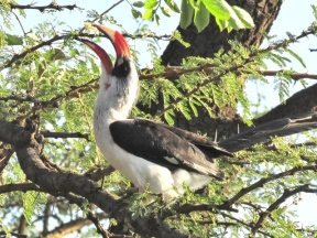 blog6-13 Serengeti