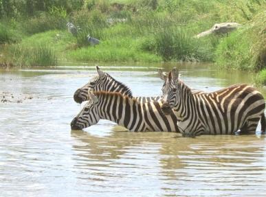 blog6-14 Serengeti