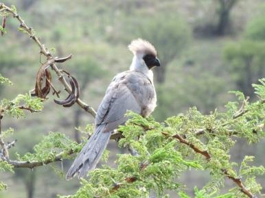 blog6-15 Serengeti