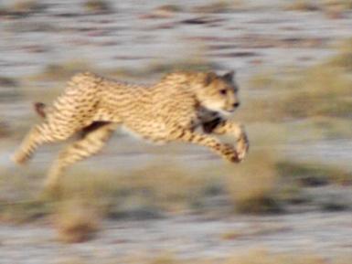 blog6-16 Serengeti - photo Norm Taylor