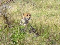 blog6-24 Serengeti