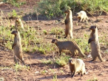 blog6-25 Serengeti