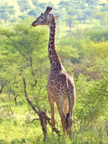 blog6-27 Serengeti