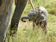 blog6-32 Serengeti - photo Gilliam Burley