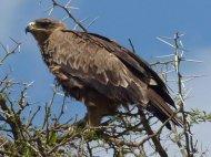 blog6-33 Serengeti