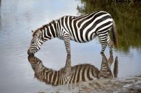 blog6-36 Serengeti - Nola Lawson