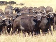 blog6-38 Serengeti