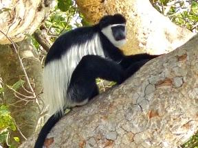blog6-42 Serengeti