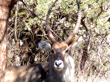 blog6-43 Serengeti