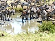 blog6-45 Serengeti