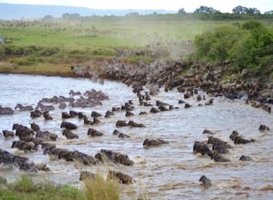 blog7-33 Masai Mara - photo John Dawson