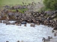 blog7-34 Masai Mara - photo John Dawson