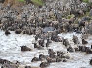 blog7-35 Masai Mara - photo John Dawson