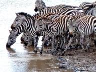 blog7-36 Masai Mara