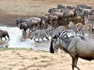 blog7-37 Masai Mara
