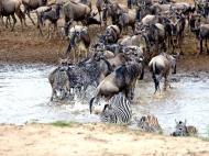 blog7-38 Masai Mara
